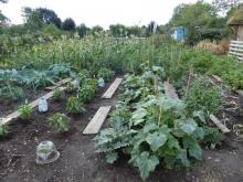 Northfields allotment best 1st year plot